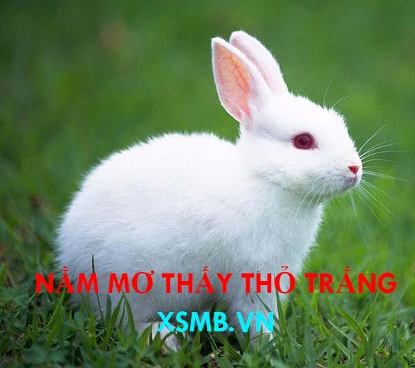 Nằm mơ thấy thỏ trắng thường mang ý nghĩa tài lộc cho gia chủ