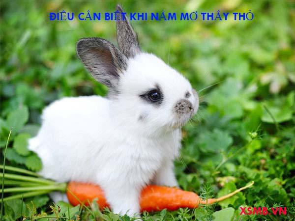 Giải mã nằm mơ thấy thỏ đánh con gì