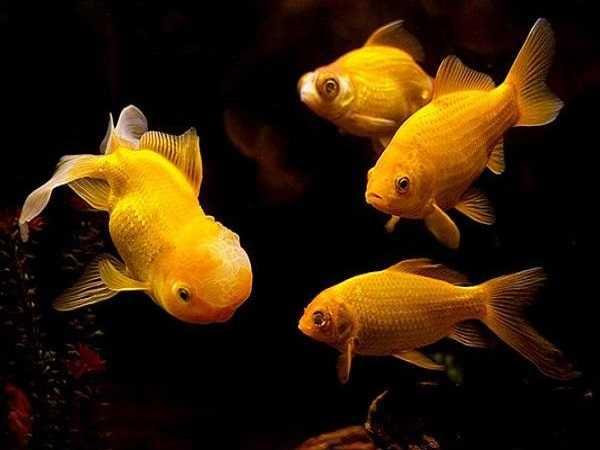 Điềm báo trong giấc mơ thấy cá