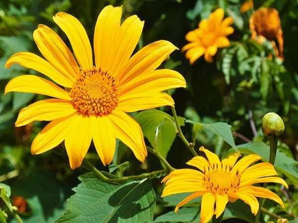 Mơ thấy hoa màu vàng đánh con đề nào?