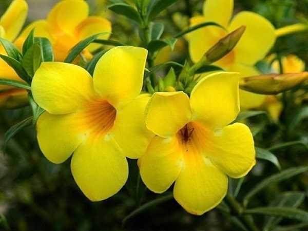 Điềm báo trong giấc mơ thấy hoa màu vàng