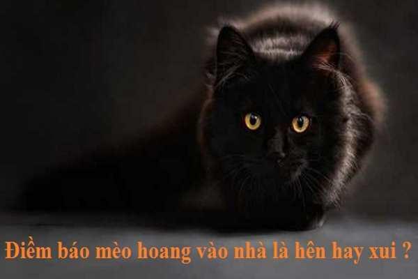 Mèo kêu mèo vào nhà là điềm báo gì