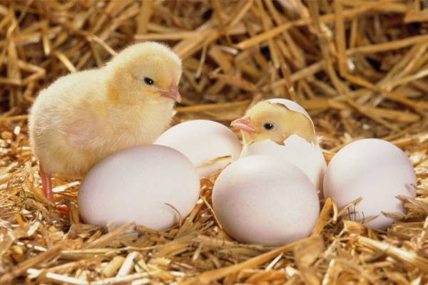 Nằm mơ thấy trứng là điềm báo trước gì? đánh số mấy đánh con gì